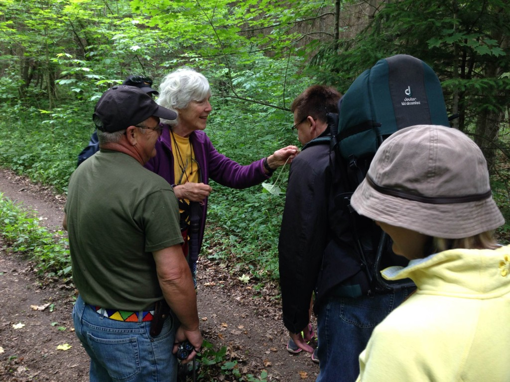 Hikers smell some Wild Ginger that was found along the way.